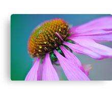 Echinacea up close Canvas Print
