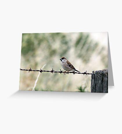 Plum-headed Finch Greeting Card