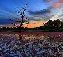 Wonga Wetlands by mspfoto