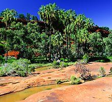Red Cabbage Palms by Gwynne Brennan