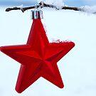 Star of Wonder by Rowan  Lewgalon