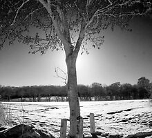 Infrared Silhouette by Andy Smith