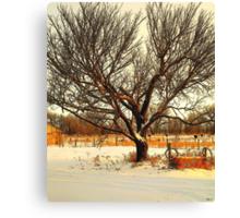 Fresh Dusting of Snow ! Canvas Print