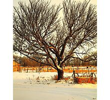 Fresh Dusting of Snow ! Photographic Print