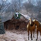 Sparkling Country Christmas-OLD barn by Stephanie Reynolds