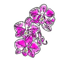 Orchid - 76 Photographic Print