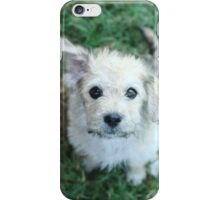 The little stray iPhone Case/Skin