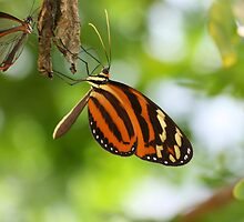 Butterfly - Artis Zoo, Amsterdam by boatsandbirds