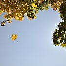 Falling in the Fall by DiamondCactus