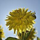 Bright Yellow Flower by DiamondCactus
