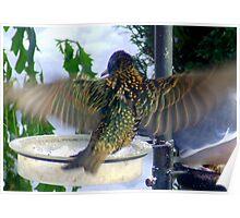 Starling In Flight Poster