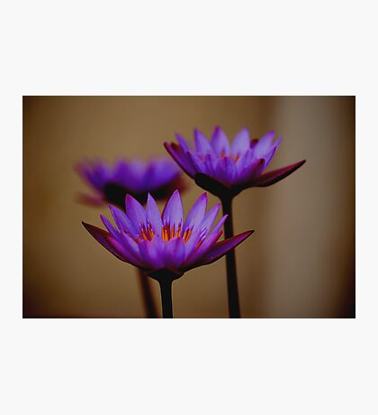 Three Lilies Photographic Print