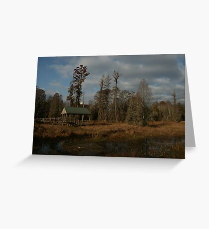 Swamp Overlook, Phinizy Swamp Nature Park Greeting Card
