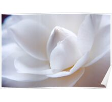Unfolding Camellia Poster