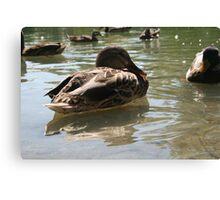 Feeding the ducks Canvas Print