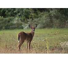 Curious doe Photographic Print