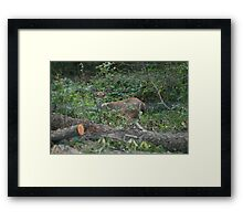 You won't catch me! Framed Print