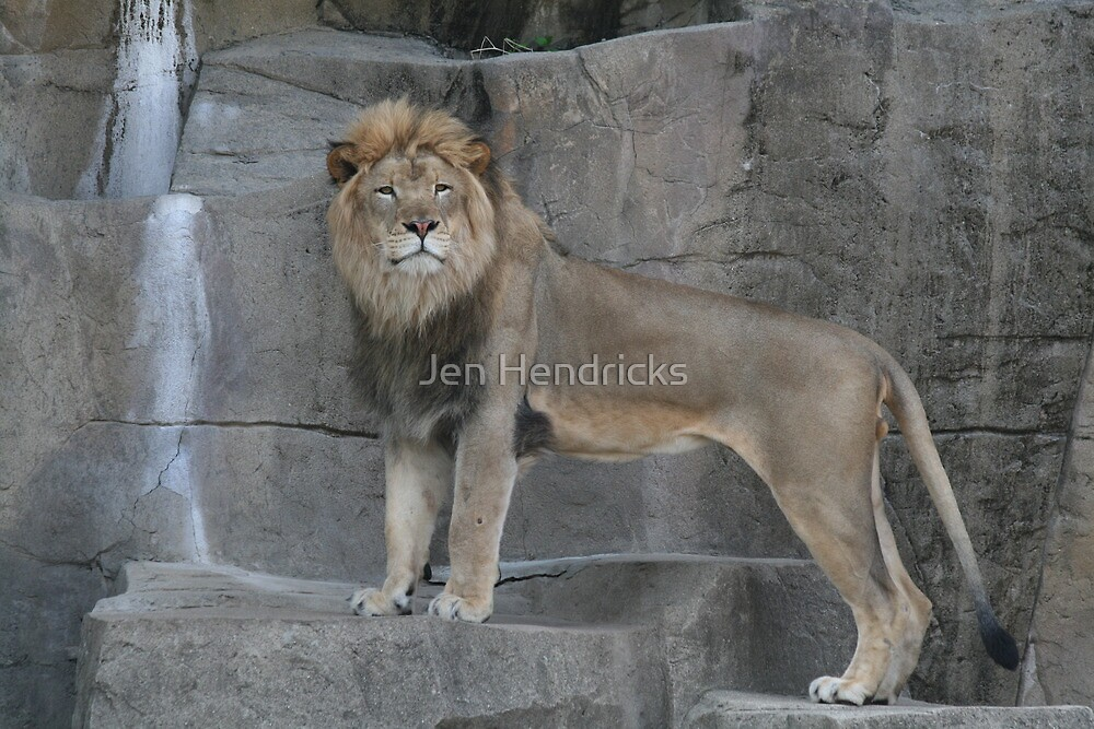King of the Jungle by Jen Hendricks
