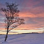 Winter Sunset - Waldridge Fell, Country Park. UK by David Lewins LRPS