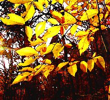 yellow leaves by jashumbert