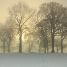 Trees on a foggy winters day. by Fred Taylor