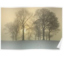 Trees on a foggy winters day. Poster