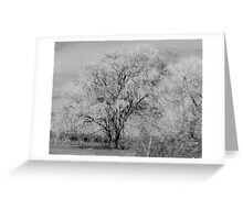 A Weeping Willows drive by Greeting Card