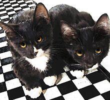 tuxedo kittens by jashumbert