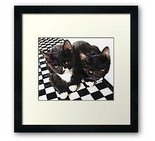 tuxedo kittens Framed Print