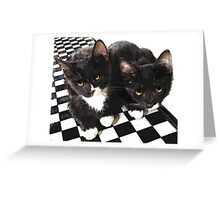 tuxedo kittens Greeting Card