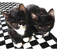 tuxedo kittens Photographic Print