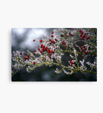Frozen fruit Canvas Print