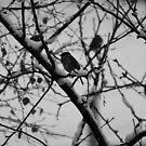 Birds by Mandy Kerr