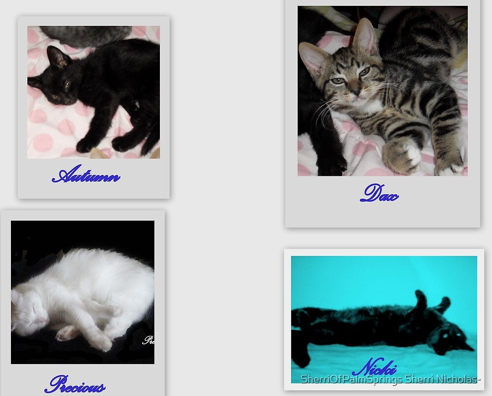 MY NEW ADDITIONS TO MY FAMILY by Sherri     Nicholas