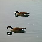 Canadian Geese - Reflections by Barry W  King