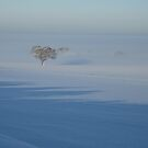 Trees in the Frozen Mist by John Dunbar