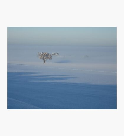 Trees in the Frozen Mist Photographic Print