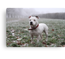 Millie in the Frost Canvas Print