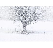 Snow Fall Photographic Print