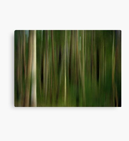 Lost in a Forest Canvas Print