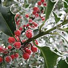 Icy Holly Berries by blueclover