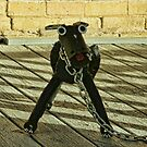 Mean Guard Dog at Old Hill County Jail by Susan Russell