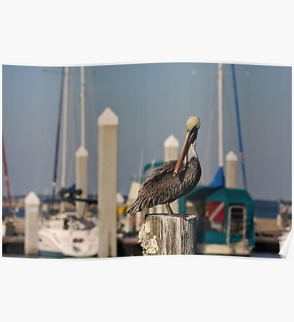Pelican with an attitude Poster