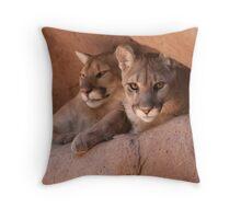 Desert Dwellers--Arizona Mountain Lions Throw Pillow