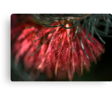 Soft Brush Canvas Print