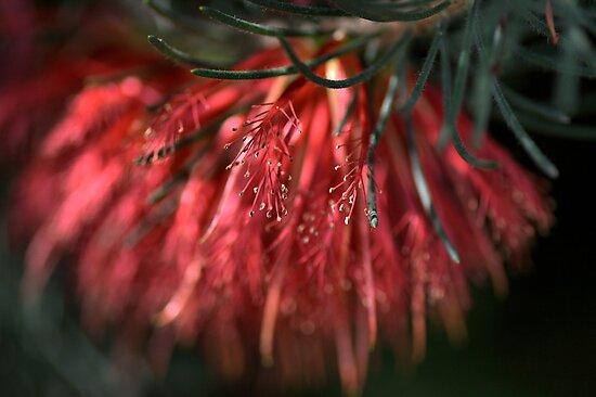 Soft Brush by Joy Watson
