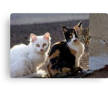 The Three Little Kittens Canvas Print