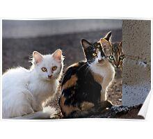 The Three Little Kittens Poster