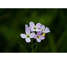 Wild Purple Flowers Photographic Print