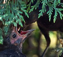 Hungry Chick by Kathy Weaver